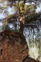 L'arbre-rocher
